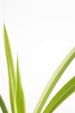 Green plant stems on white Stock Photos