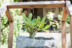 Green plant in stone pot with sunshie Stock Photo