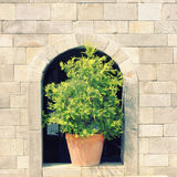 Green plant on stone wall Stock Image