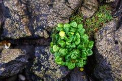 Green plant between stones Stock Image