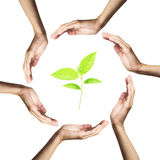 Green plant surrounded by hands over white Royalty Free Stock Images