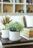 Green plant on table Home decoration. Room interior sofa and pillow book shelf background Royalty Free Stock Photography