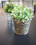 Green Plant on table Home interior decoration Royalty Free Stock Photo