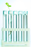 Green plant in test tubes which are with water Stock Image