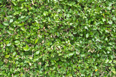 Green plant. And texture background stock image