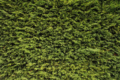 Green plant texture Stock Image
