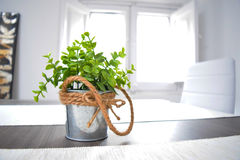 Green plant in a tin pot knotted rope on the wooden table in the sunlight Royalty Free Stock Photography