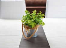 Green plant in a tin pot on the wooden table in the sunlight Stock Photo