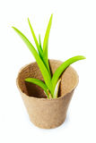 Green plant for transplanting in the peat pot Royalty Free Stock Photos
