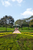 Green plant, tree, footpath in park at daytime Stock Image