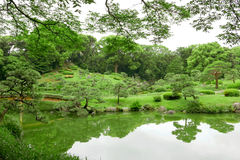 Green plant, tree and lake in Japanese zen garden Stock Images