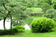 Green plant, tree and lake in zen garden. Green plant, tree and lake in the zen garden Stock Photos