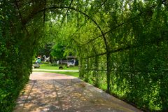 Green plant tunnel. In garden at daytime Stock Photos