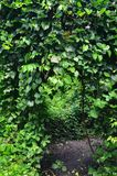 Green plant tunnel with purple flower. In the forest Stock Photography