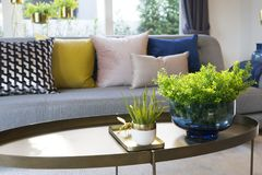 Green plant vase on table with colorful cushion on sofa royalty free stock photography