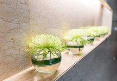 Green plant in vase decorated on wall . Stock Images