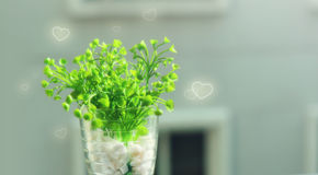 Green plant in a vase with graphic hearts. Green plant (heart shape) in a vase and the morning sunlight with hearts effect (love concept Royalty Free Stock Photography