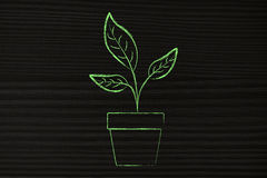 Green plant in vase illustration Royalty Free Stock Images