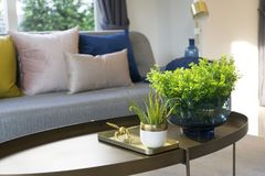 Green plant vase on table with colorful cushion on sofa royalty free stock images