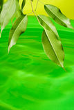 Green plant and water. Ecology concept with water and leaves Royalty Free Stock Image