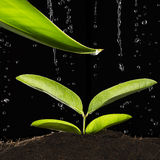 Green Plant With Water Drop Stock Photography