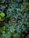 Green plant and wedding rings Stock Images
