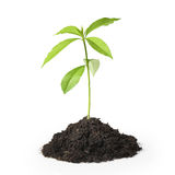 Green plant on a white background Royalty Free Stock Images