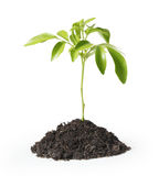Green plant on a white background Stock Photos