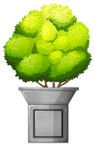 A green plant Stock Image