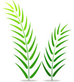 Green plant on a white background Stock Photos