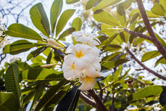 Green plant with white flower. Photo of tropical green plant with white flower Stock Photos