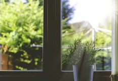 Green Plant on White Flower Pot Near the Window Stock Photo