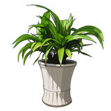 Green plant in white pot Royalty Free Stock Images