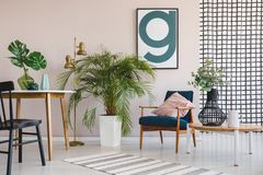 Green plant in white pot between wooden table with leaf in black vase and retro armchair with pastel pink pillow, real photo with royalty free stock image