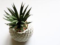 Green Plant on White Vase Stock Image