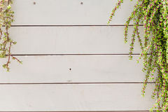 Green plant. On the white wooden texture Royalty Free Stock Photo