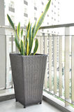 Green plant in wicker flower pot on the porch Royalty Free Stock Photography