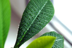 Green plant on a window Royalty Free Stock Photo