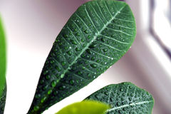 Green plant on a window Royalty Free Stock Image