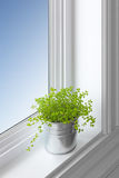 Green plant on a window sill stock photo