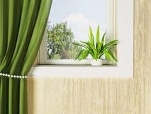Green plant on the windowsill Stock Photos