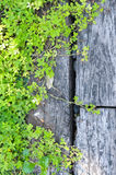 Green plant on wood Royalty Free Stock Photos