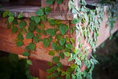 Green plant on wood. In garden Stock Photography