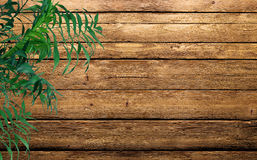Green plant. On the wooden background Stock Photography