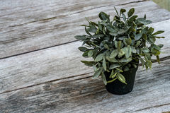 Green plant on wooden desk Stock Images