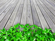 Green plant on wooden floor Stock Images