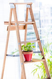 Green plant on wooden ladder Stock Photo