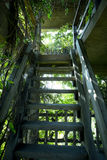 Green plant and  wooden ladder Royalty Free Stock Photography