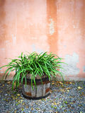 Green plant in wooden pot decorating house exterior Stock Image
