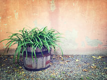 Green plant in wooden pot near an old wall Stock Photography